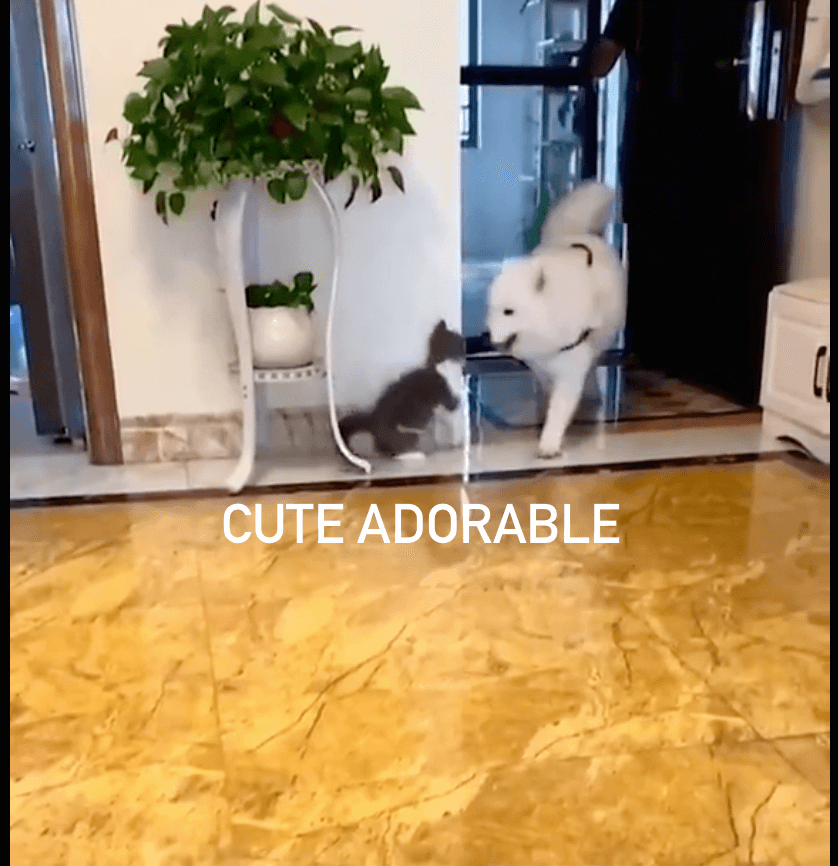 Cute cat pranks dog